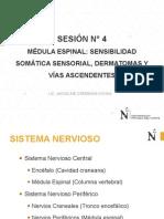 Sesion 4 - Médula Espinal