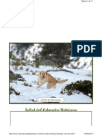 Salud Labrador