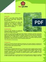 Coltivazione Stevia