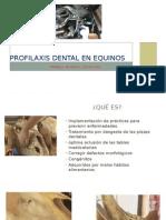 Profilaxis Dental en Equinos