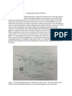 integumentarysystemlabreport  1