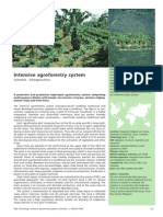 3 IntensiveAgroforestrySystem Colombia