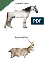 especies anatomía