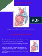 Aula Cardiovascular