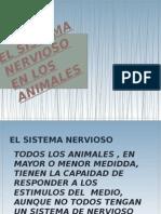 El Sistema Nervioso en Los Animales