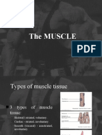 BSN 1-1a-2 Muscle anatomy an physiology