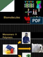 Presentation 06 Biomolecules1