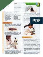 El Pancreas - Práctica de Laboratorio