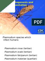malaria klinis.pptx