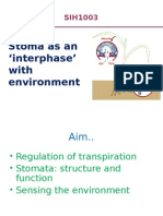 Stoma Interphase With Environment
