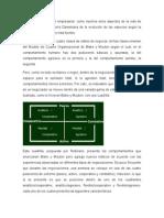 Modelo del cuadro organizacional.docx