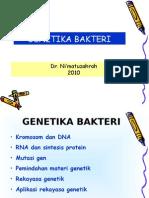 genetika bakteri_2011