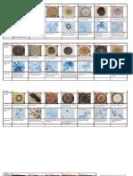 Mycology Colour Atlas 2
