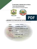 Control de Malezas y Fertiliacion en La Injertera