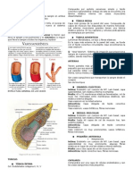 Histologia Cardio