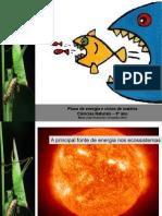 8fluxo Energia Teias Alimentares 121101195601 Phpapp02