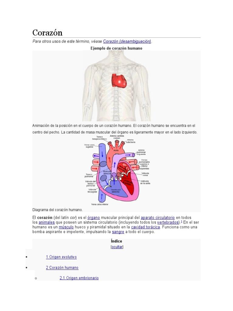 Bonito Corazón Humano Marcado Patrón - Anatomía de Las Imágenesdel ...
