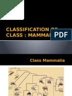 Classification of Class Mammalia Pptx