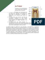 Fisiopatologia Pulpar