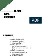 Musculos Del Perine y Miembro Sup
