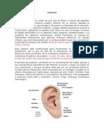 neuroanatomía de la Audición
