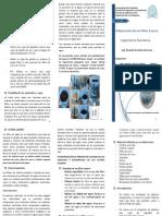 Brochure Elaboración Filtro Casero