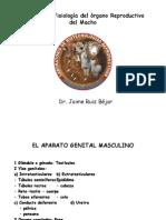 Fisiología reproductiva en macho.2015