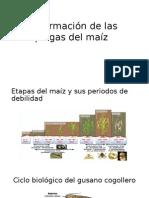 Informacion de Las Plagas Del Maíz