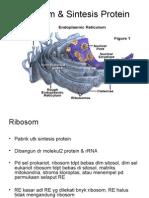 Ribosom & Sintesis Protein.ppt