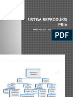 Sistem Reproduksi Pria 1