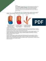 Funcionamento Do Sistema Circulatório