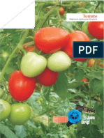 Tomato High-tech Cultivation Practices-English