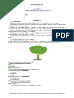 clasificacion-plantas