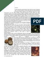 Cenni Storici SuiCenni storici sui coating luminescenti Coating Luminescenti