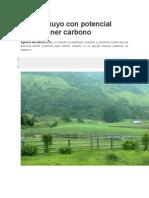 Pasto Kikuyo Con Potencial Para Retener Carbono