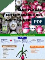 Cebolla y Ajo - Plagas y Enfermedades - Barranca