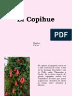 El Copihue