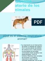 El sistema respiratorio de los animales.pptx
