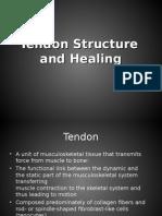 Tendon healing