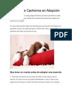 Todo Sobre Cachorros en Adopción