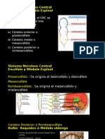 Sistema Nerviosos Central