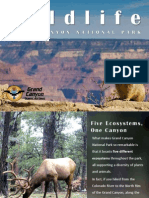 Wildlife Grand Canyon National Park
