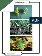 poorly plants