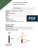 Modelo de roteiro de aula prática hematologia.docx