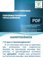 Slide Gametogênese
