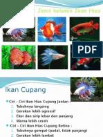 Menentukan Jenis Kelamin Ikan Hias