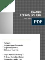 Anatomi Reproduksi Laki-Laki