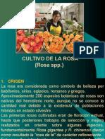 FLORICULTURA CULTIVO DE ROSAS (2).ppt