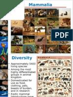 BI256W15 Lecture15 Mammals