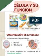 2.- La Celula y Su Funcion